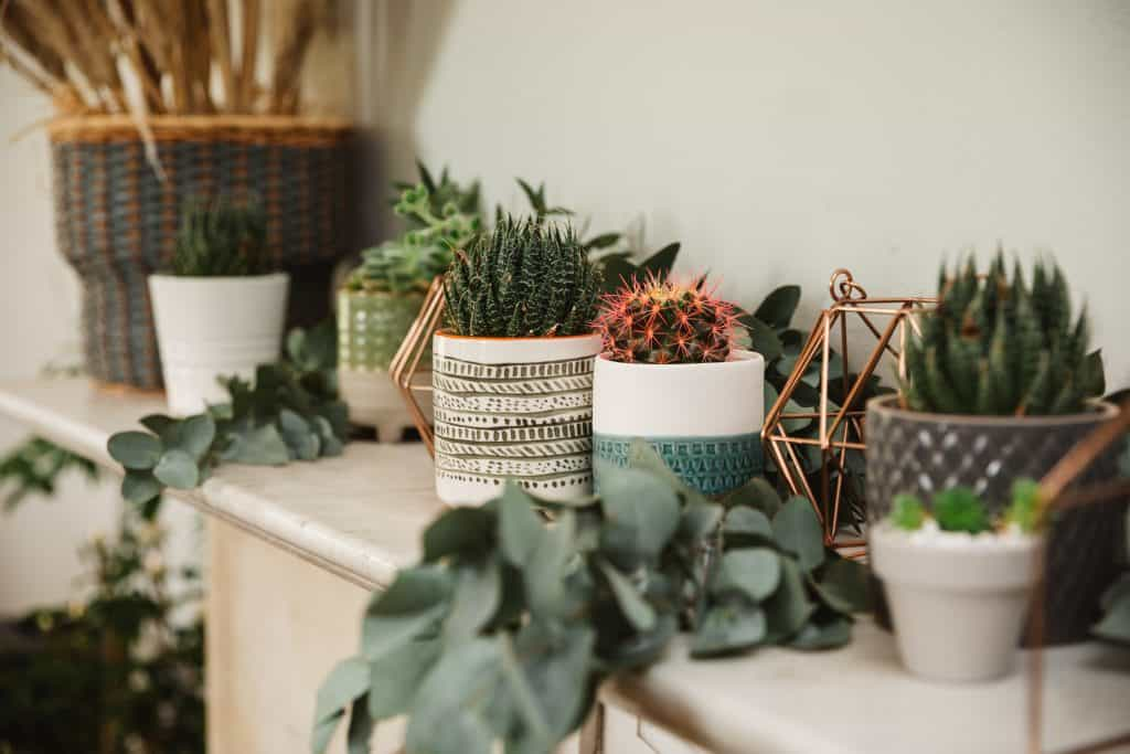 Cactus wewdding favours