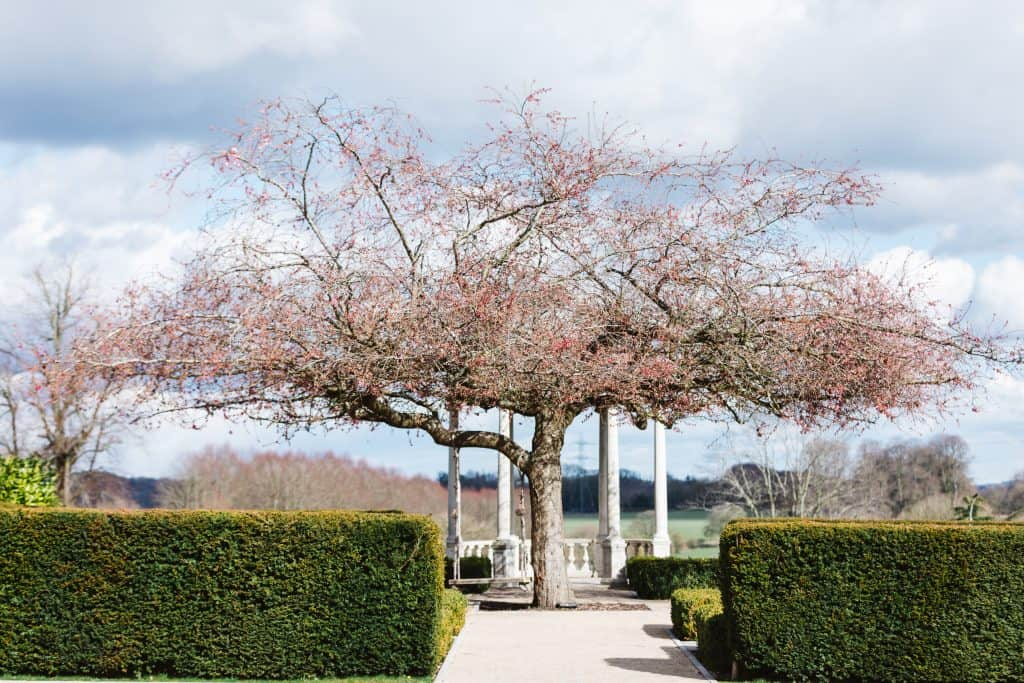 Blossom tree Froyle Park